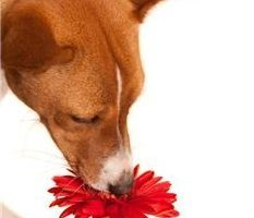 Happiness Coaching Exercise - shown by dog smelling flower